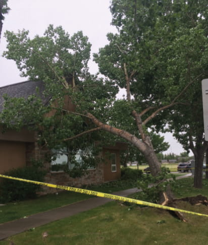 Repairing tree and storm damage