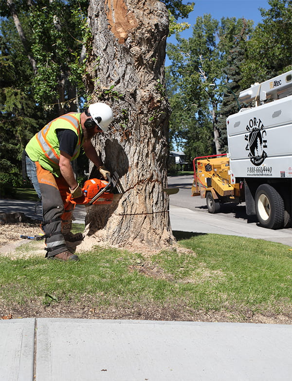 Alberta Tree Removal Services